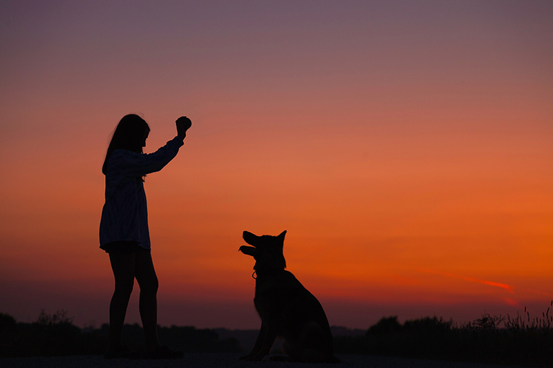 Two-Fold Training For You And Your Dog