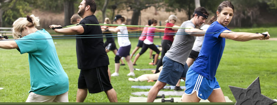 Chicago Dog Training Boot Camp